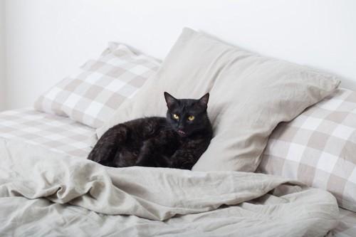 ベッドに居る黒猫