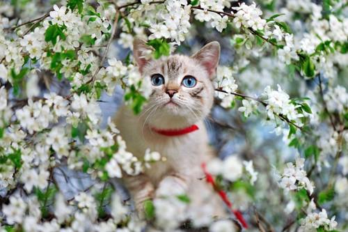 花に囲まれる猫