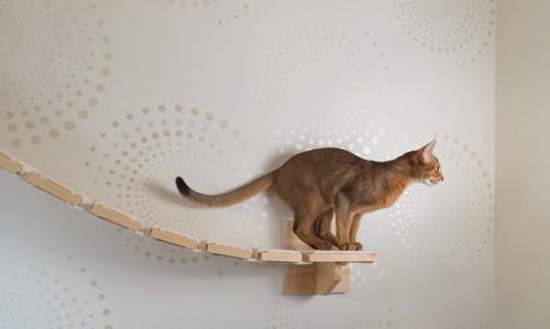 跳ぼうとする猫