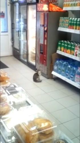 まわりを見る猫