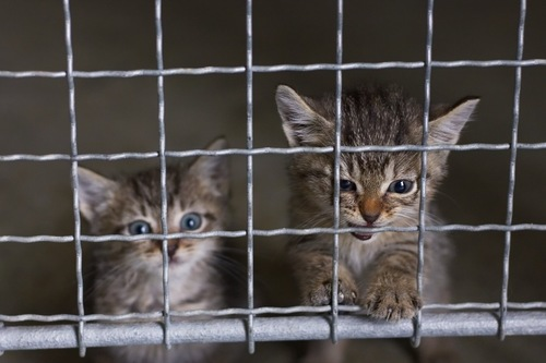 abandoned little kittens in an animal shelter