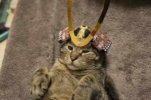 端午の節句の兜を頭に乗せた猫
