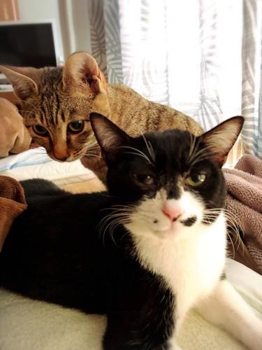 日向ぼっこ中の猫たち