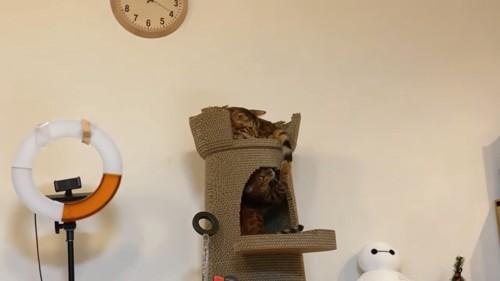 タワーにいる2匹の猫