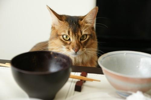 お茶碗と猫