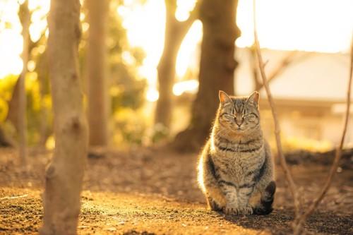 夕暮れ時に座っている猫