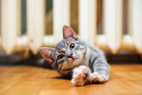 伏せながら伸びている猫