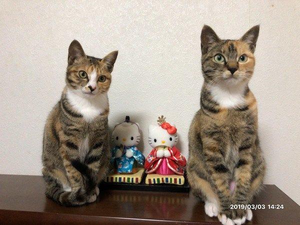 お雛様と双子猫
