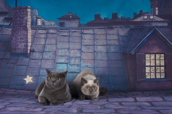 夜、屋根の上の猫