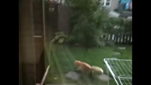 猫が落ちてくる