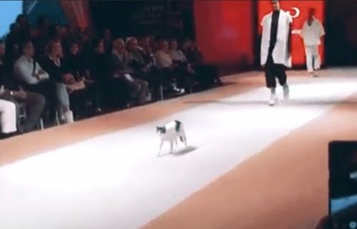 キャットウォークに猫とモデル