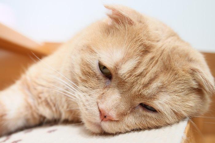 階段で寝る猫