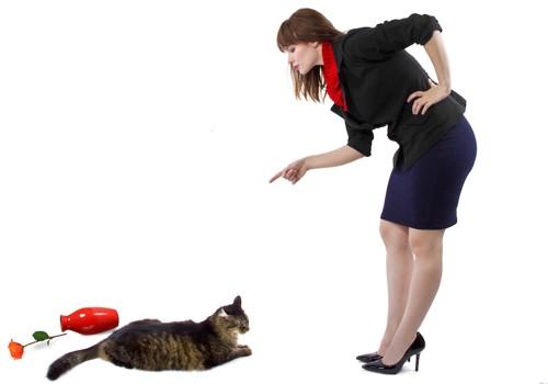 花瓶を倒した猫と叱る女性