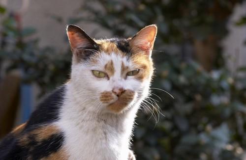 顔をしかめる猫