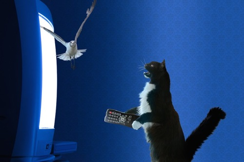 テレビから出てきた鳥に驚く猫