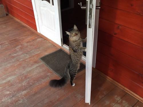 開いたドアのそばで立つ猫