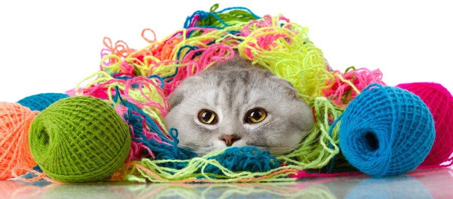 毛糸に包まれている猫