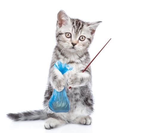 ウンチの入った袋を持って立つ猫