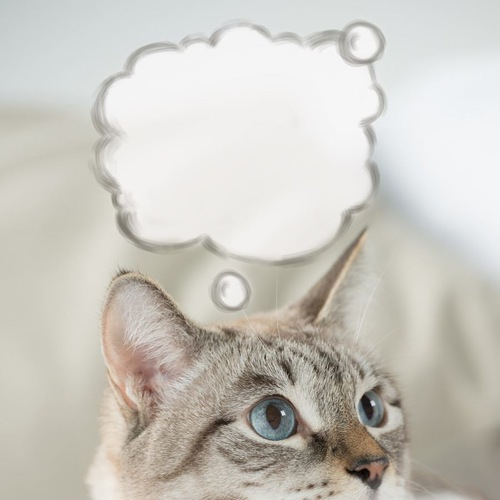 吹き出しと猫