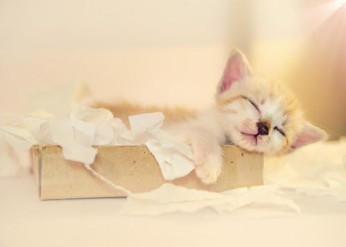 紙にいたずらした子猫