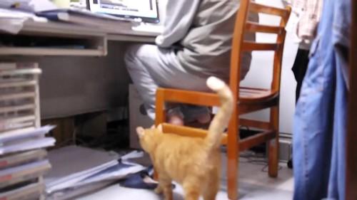 お父さんの所に向かう猫