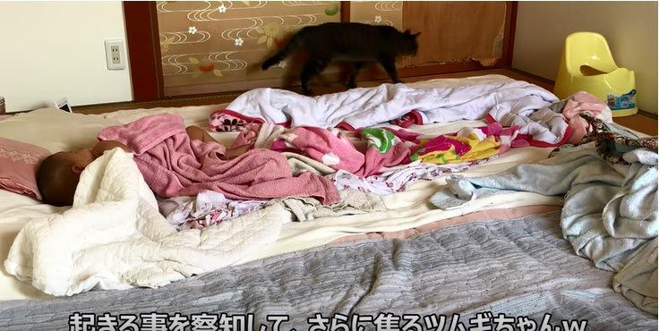 赤ちゃんと部屋を動きまわる猫