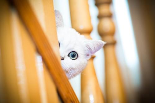 階段から覗く猫