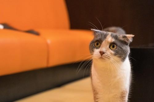 悲しそうに見上げる猫