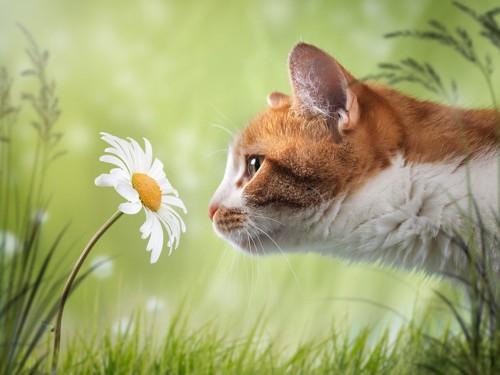 花の匂いを嗅いでいる猫