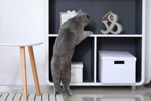 チェックする猫
