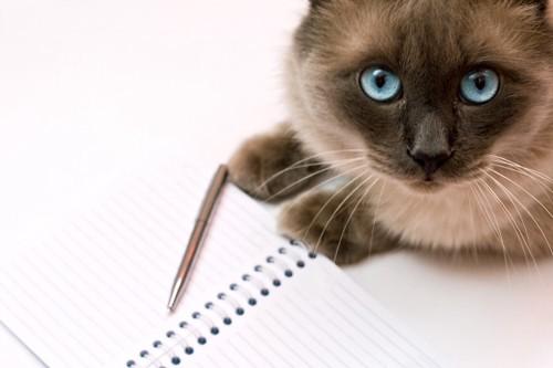 ノートと青い瞳の猫