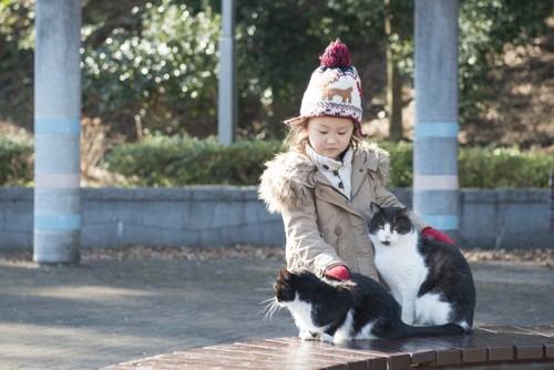 女の子と遊ぶ猫