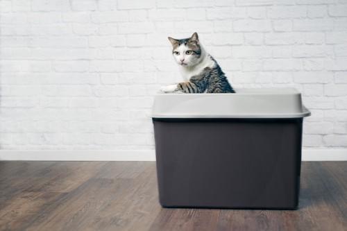 トイレから顔を出す猫