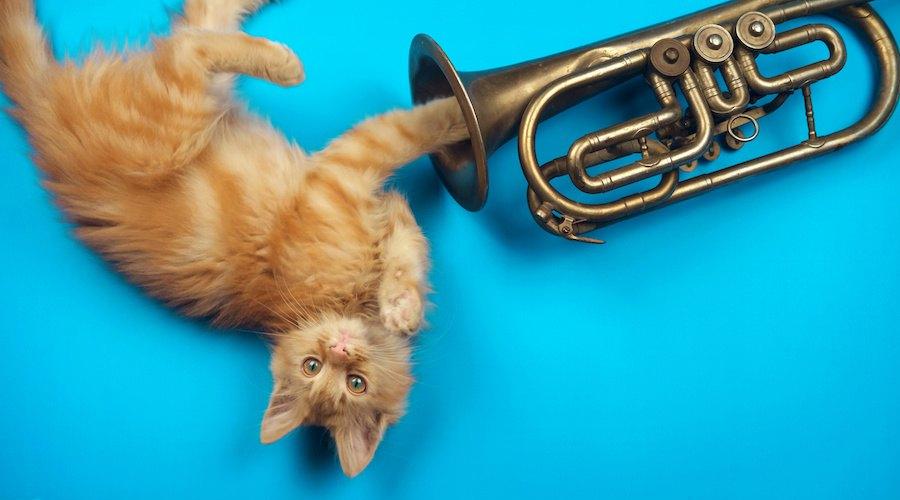 寝転んでトランペットに手を入れる猫