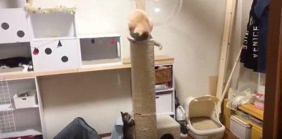 羨ましそうな猫達