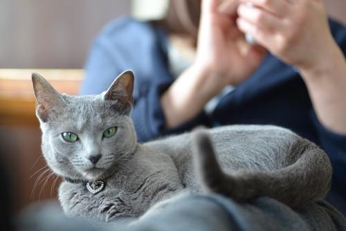 スマホを操作する人の膝に乗る猫