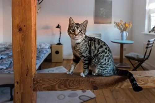 猫がいる部屋
