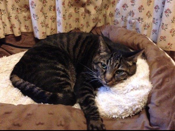 犬の寝床を奪う猫
