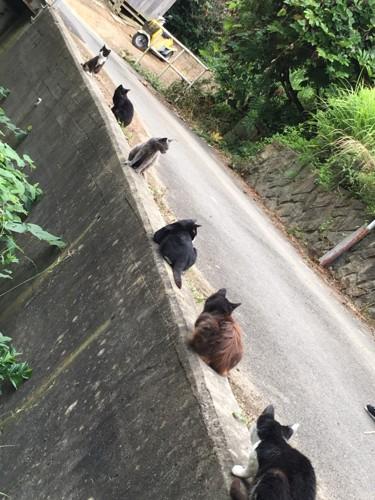一直線に並んだ猫たち