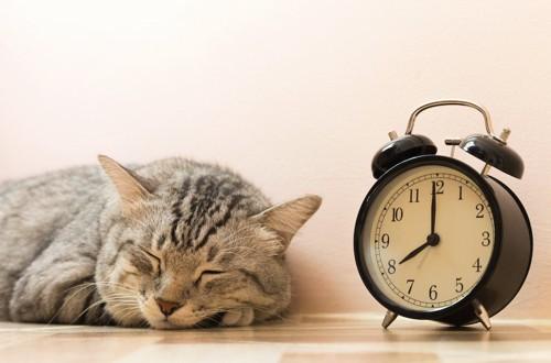 時計の隣で眠っている猫