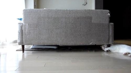 ソファーの下で遊ぶ猫