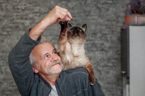 飼い主の持つおやつを取るために肩に乗る猫