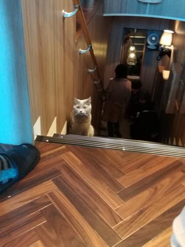 階段で遭遇した猫ちゃんの写真