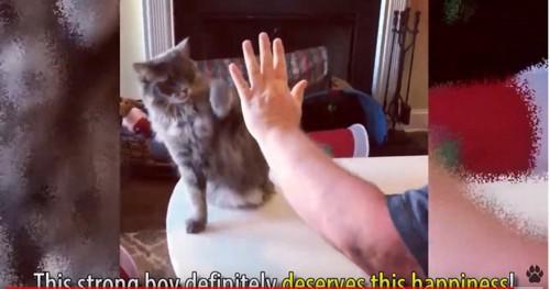 人間の腕と猫
