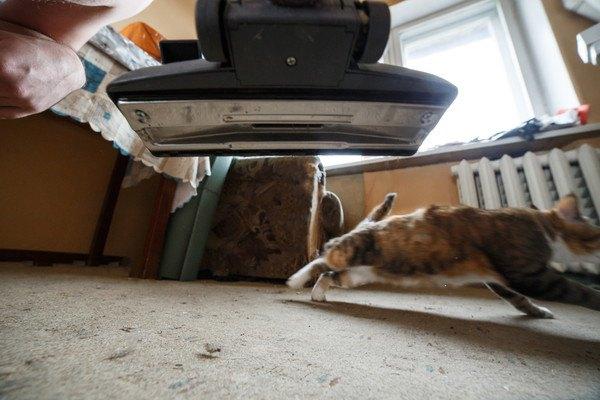 掃除機で逃げる猫