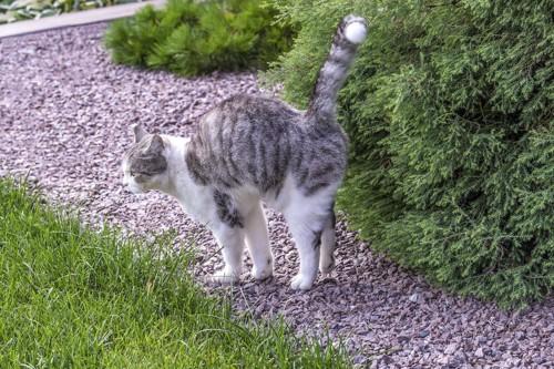 外の植え込みにスプレーを行う猫