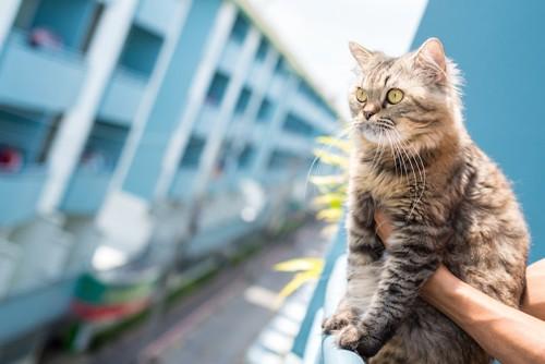 飼い主に抱かれて外を見つめる猫