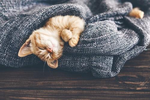 毛布で眠る子猫