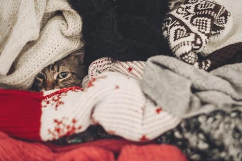 飼い主のセーターに潜る猫