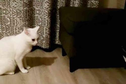 座り続ける白猫